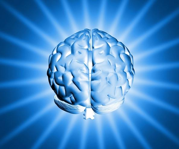 Struktura mozku a princip ukládání informací